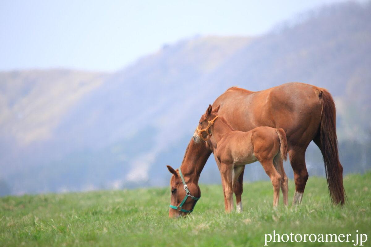 Horse リンク画像