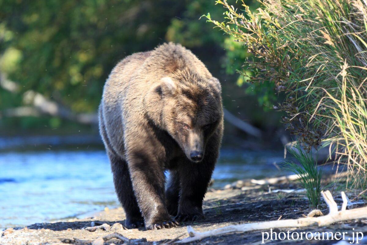 bear リンク画像