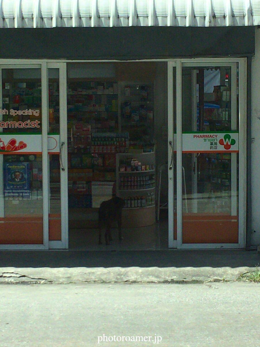タイ チェンマイ 犬 店内