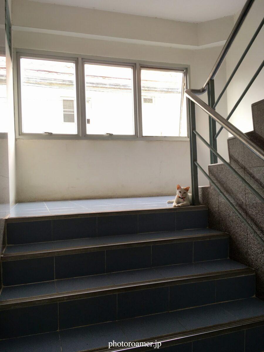 タイ チェンマイ アパート ネコ