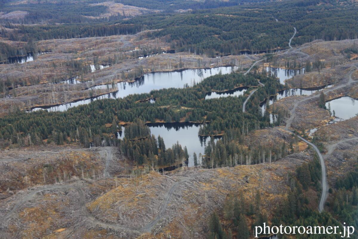 アラスカ 森林伐採 伐採地