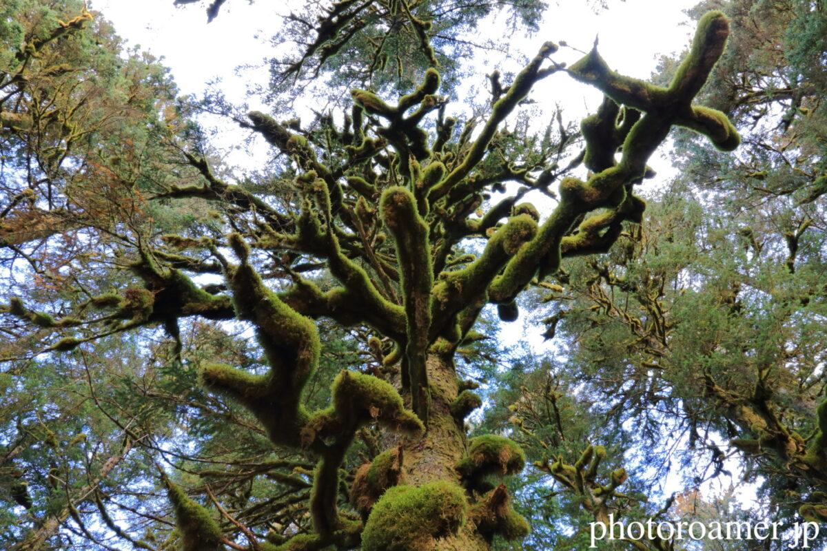 アラスカ キャンプ 苔 木