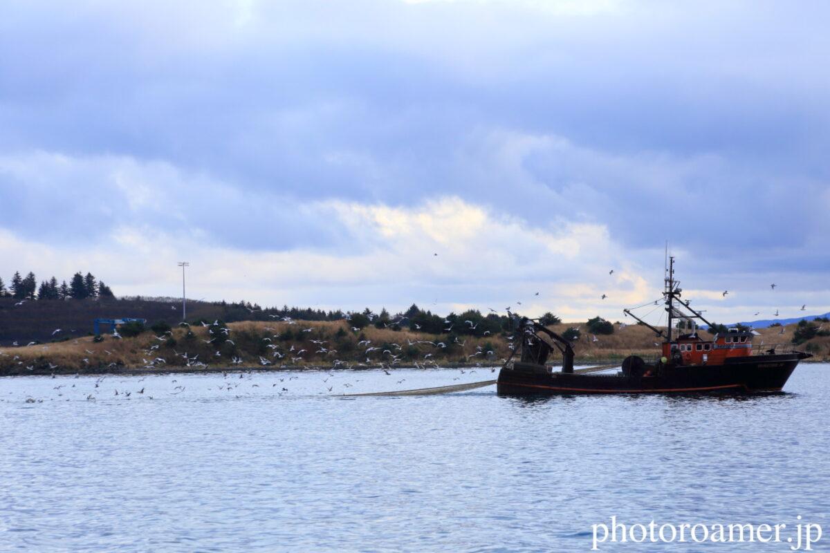 アラスカ 港 漁船 カモメ