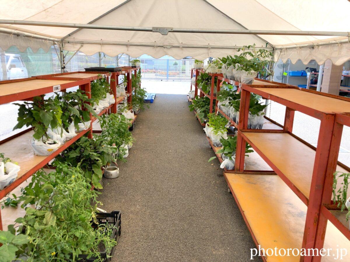 JA花園農産物直売所 ビニールハウス 野菜 苗