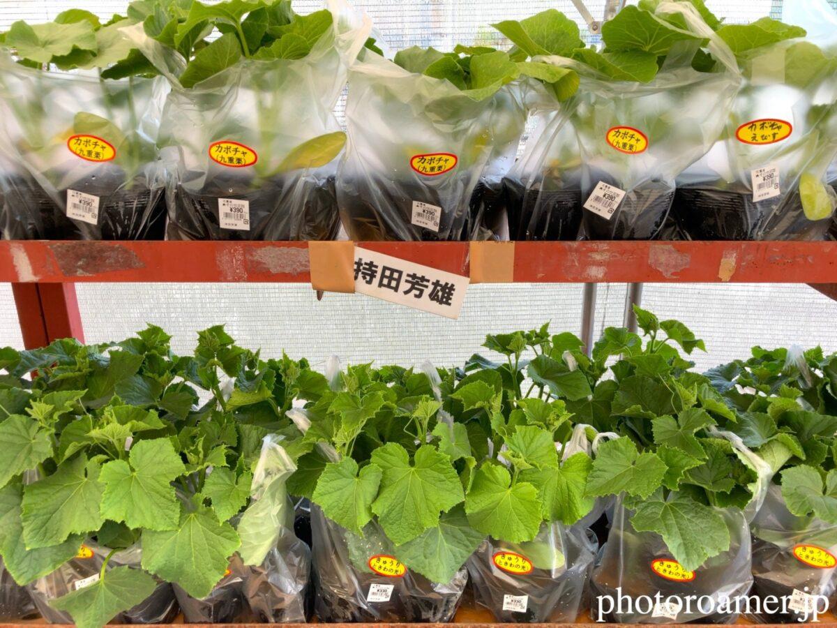 JA花園農産物直売所 ビニールハウス かぼちゃ 苗