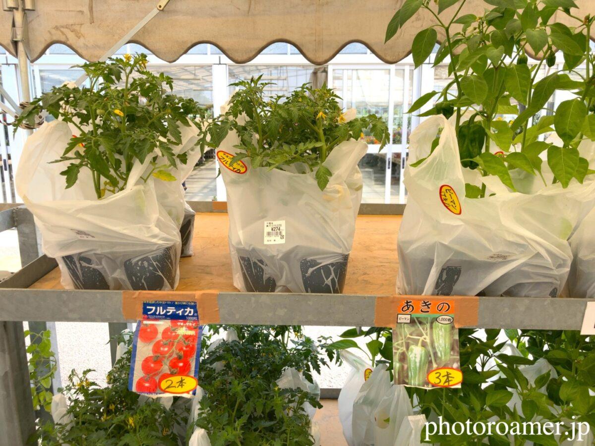 JA花園農産物直売所 ビニールハウス ピーマン 苗