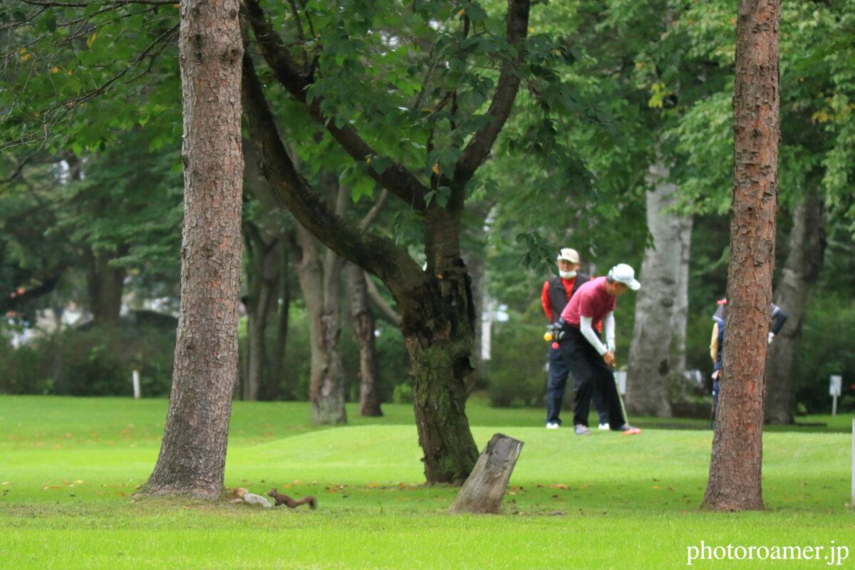 緑ヶ丘公園 パークゴルフ エゾリス2