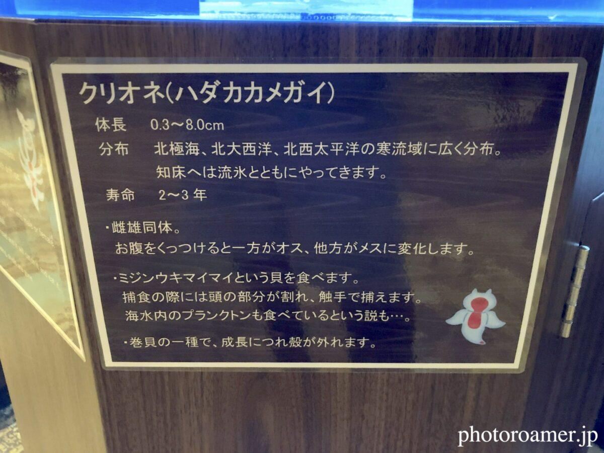 北こぶし知床 ホテル&リゾート ミニ流氷館 クリオネ 解説