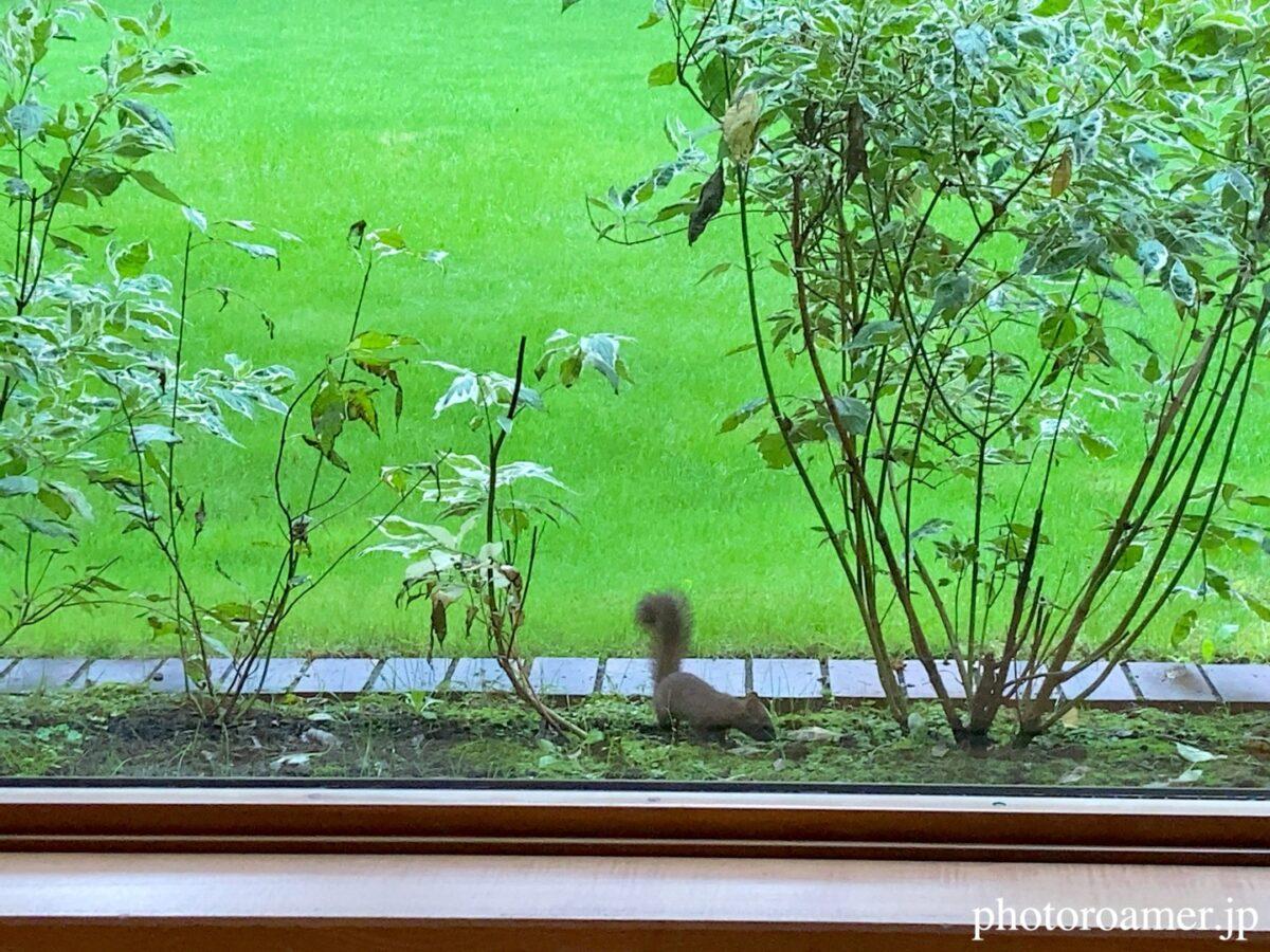 北海道ホテル帯広 朝食会場 エゾリス 目の前