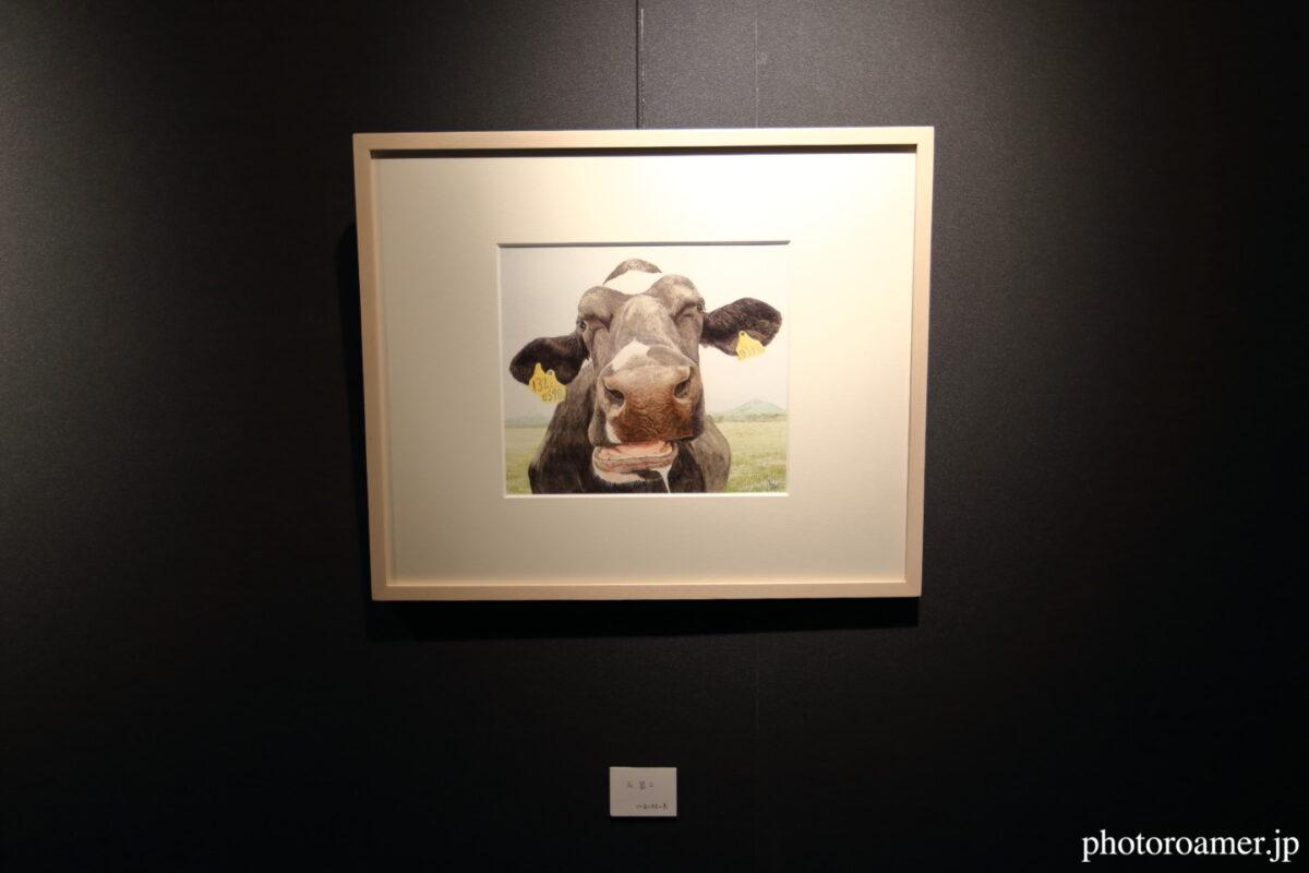 知床自然センター ミニギャラリー 牛