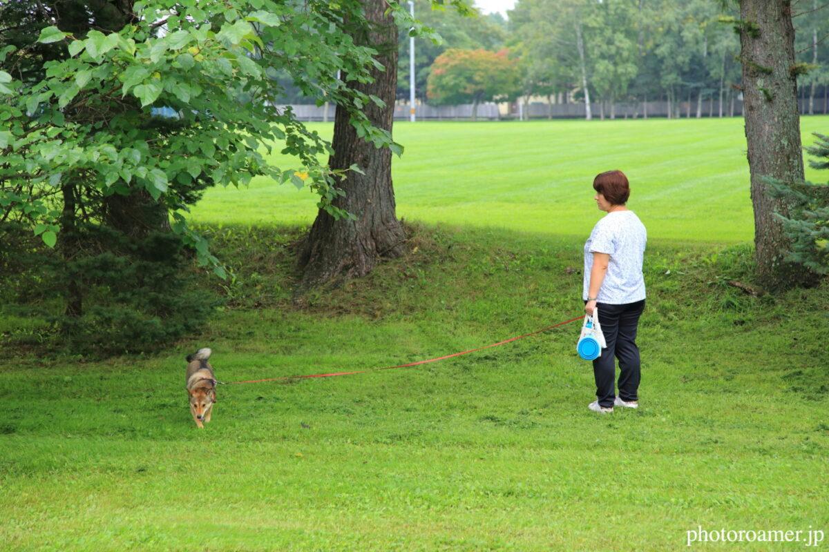 緑ヶ丘公園 柴犬1