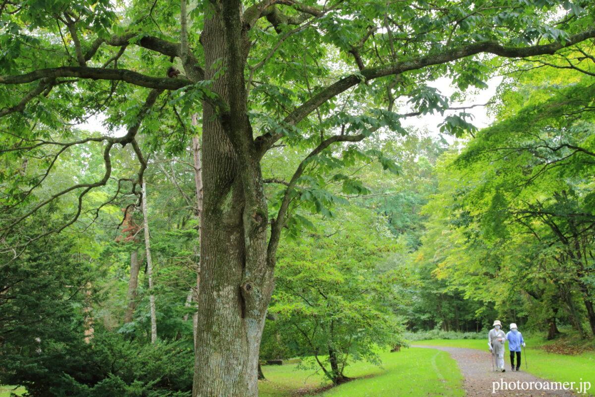 緑ヶ丘公園 ウォーキング1 エゾリス